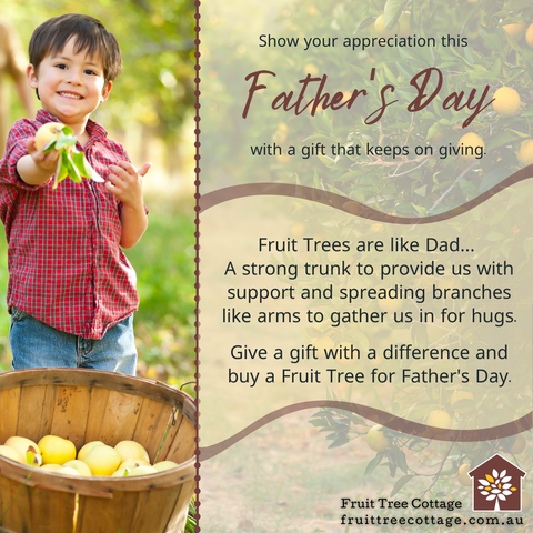 Gift a Fruit Tree for Father's Day