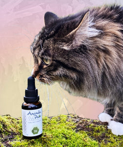 A curious kitty, perched on a mossy tree branch, touching her nose to a bottle of her favorite CBD pet wellness drops.