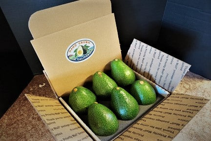 6 Nabal Avocados - A Rare Variety not found in stores