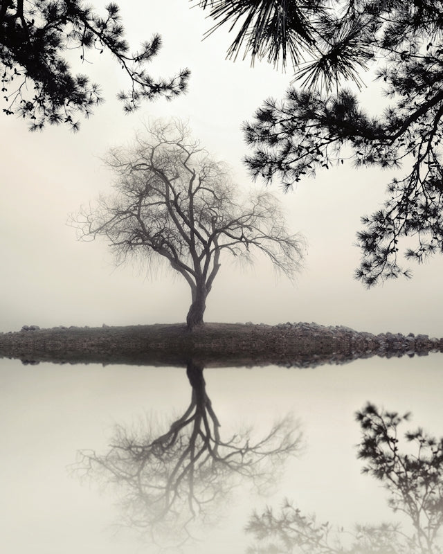 black and white landscape photography, trees, lake