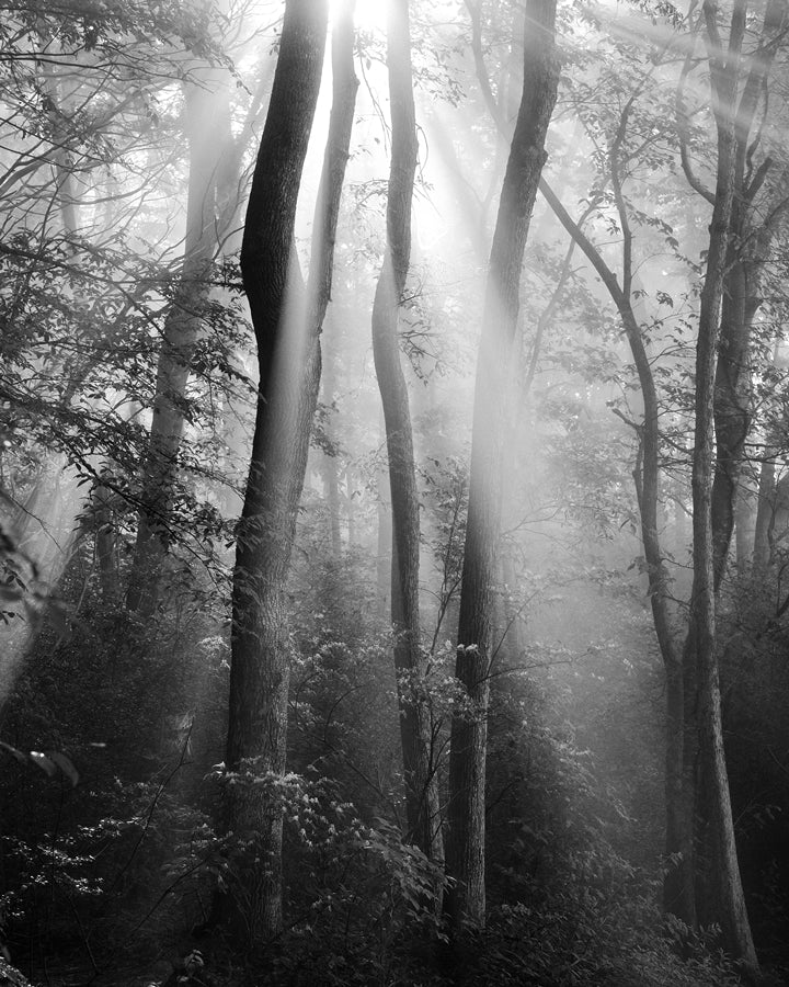 black and white landscape photography prints, trees, forest