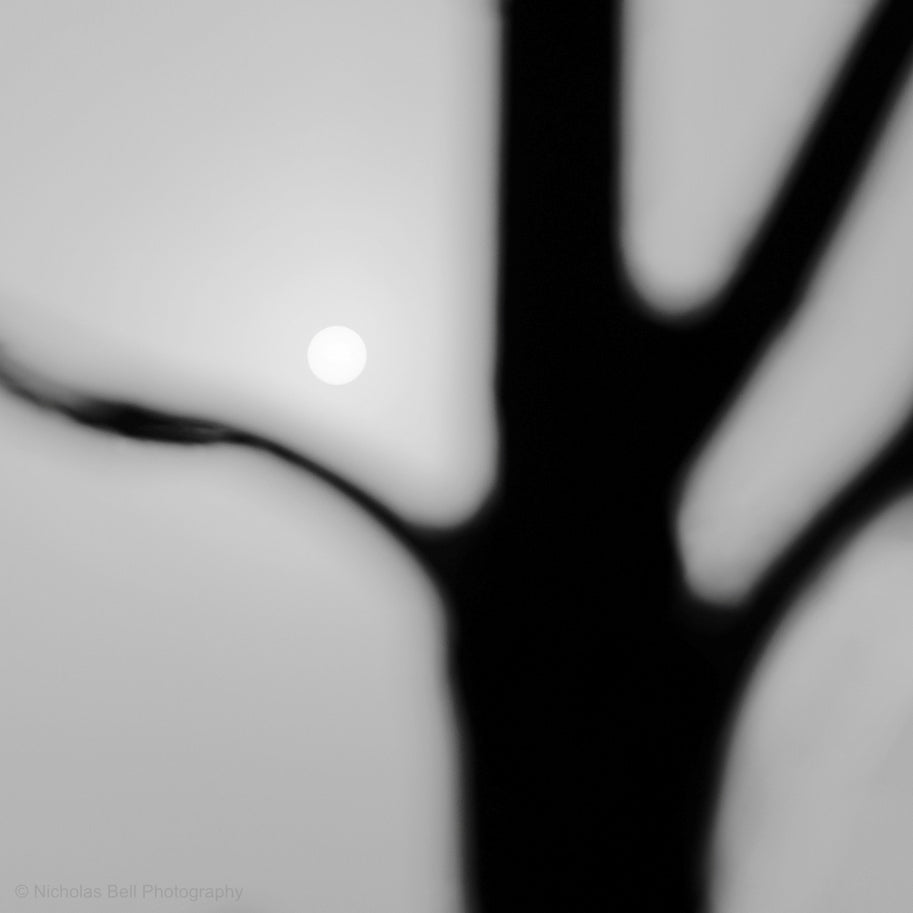 black and white abstract photography, trees