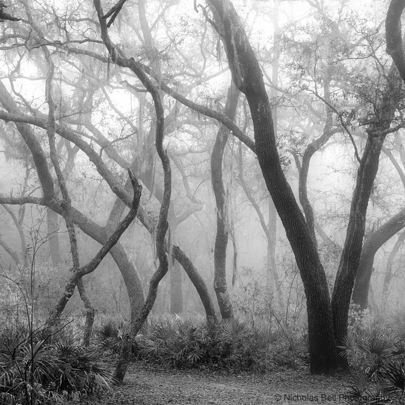 black and white Florida landscape print, photography