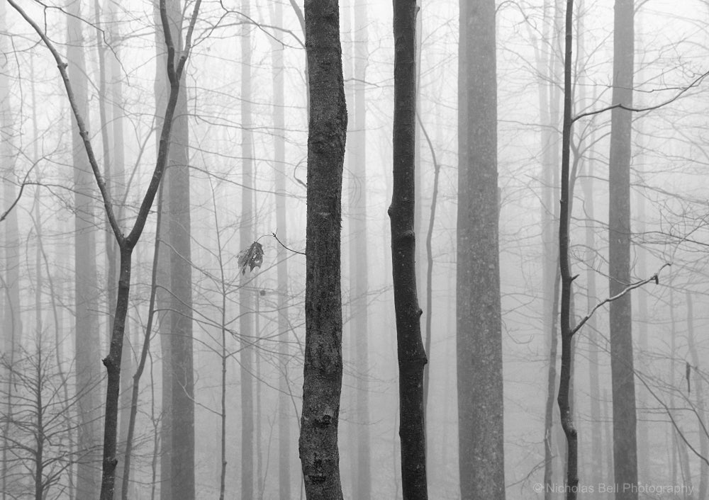 black and white landscape photography, forest, trees