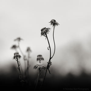 black and white nature photography