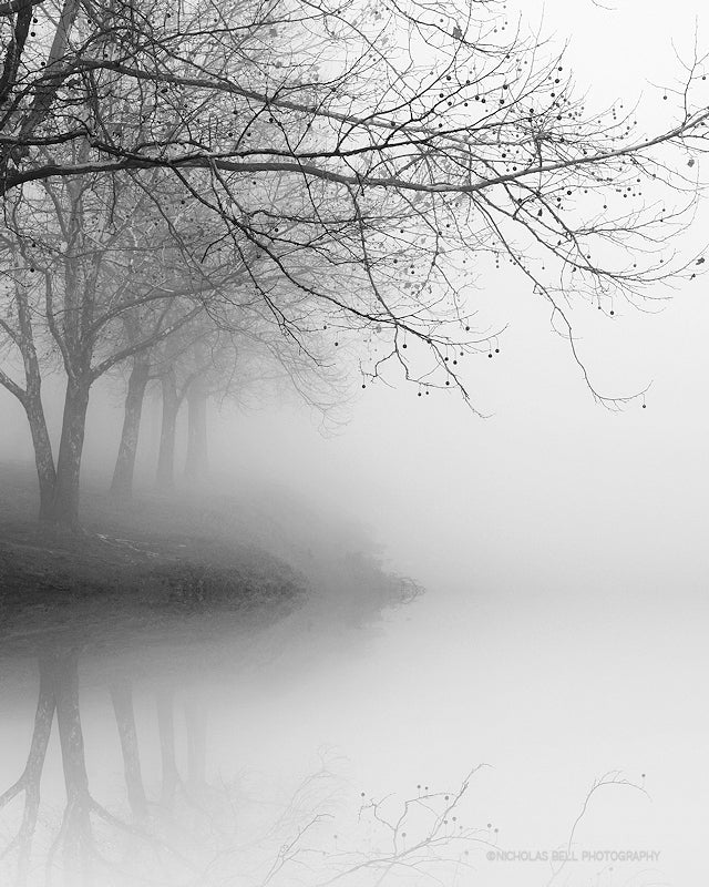 black and white photography prints, trees, landscape
