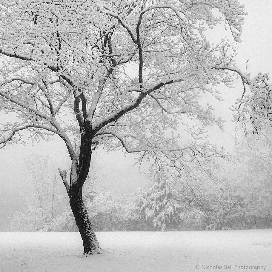 black and white photography prints, landscape, trees