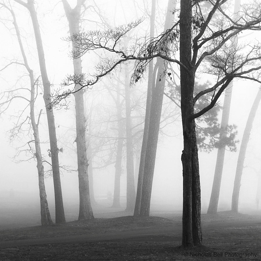 black and white tree photography prints