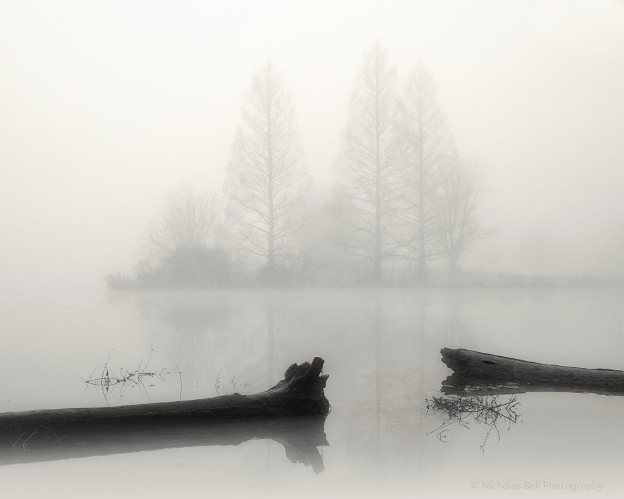 Foggy Morning, Lakeside