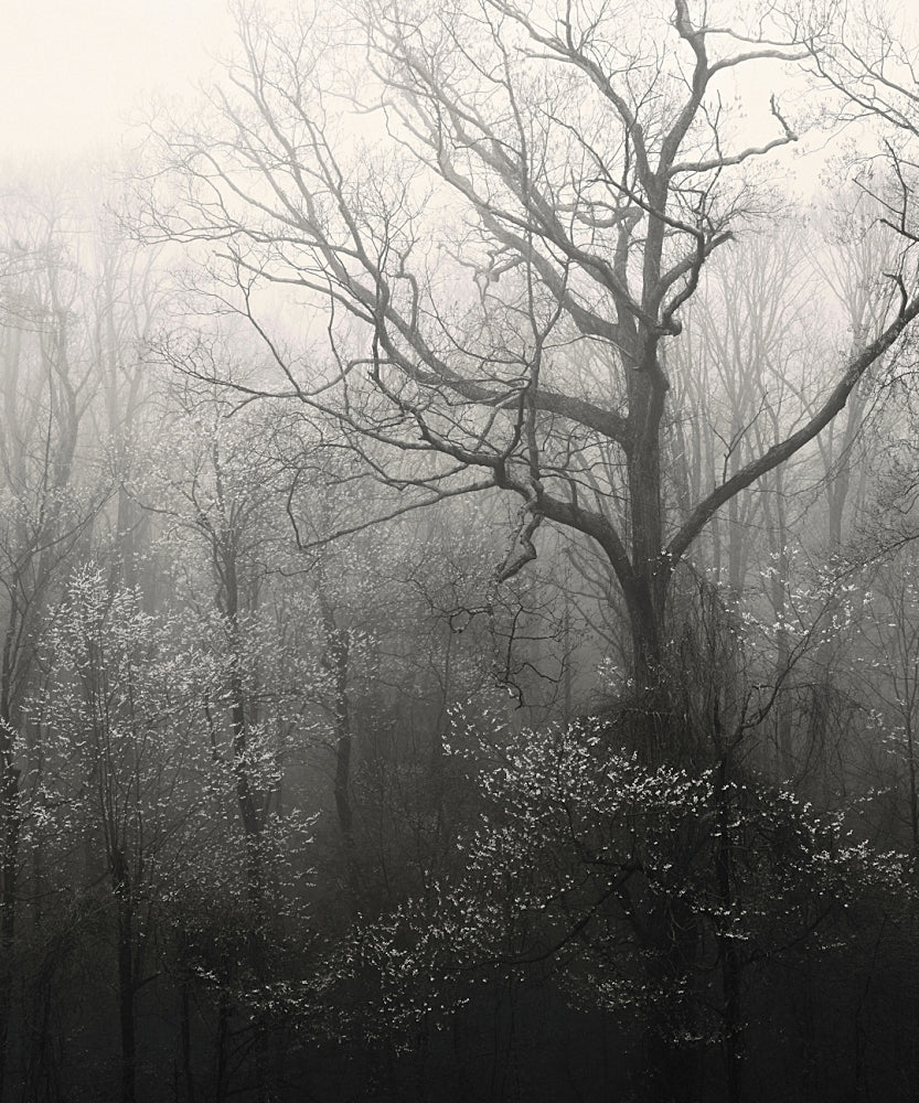smoky mountains photography, trees, forest, print