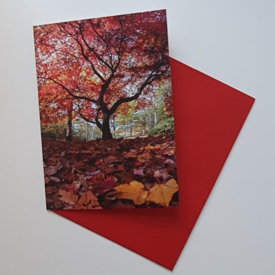 Golden Acre park red tree art card