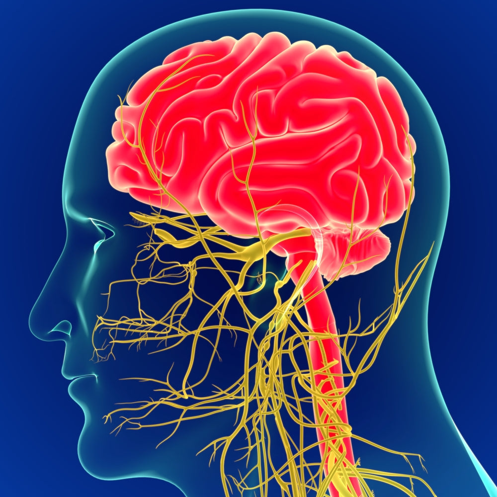 Is there a link between pinched nerves and anxiety?