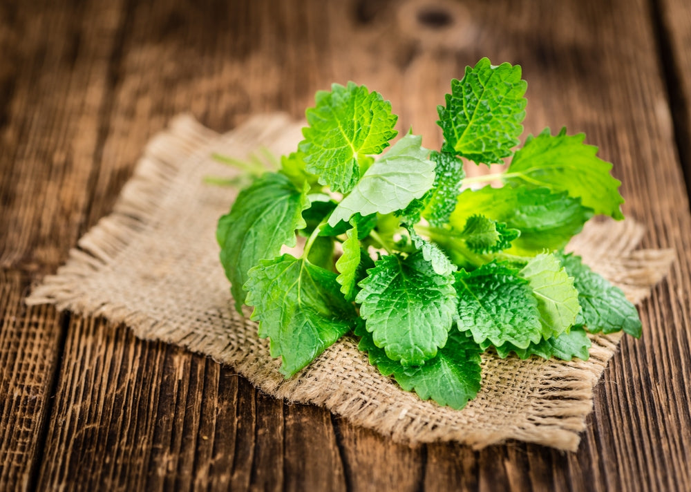 What You Should Know About Lemon Balm