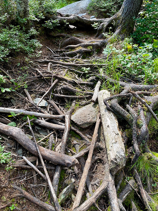 appalachian trail difficult terrain covered in tree roots