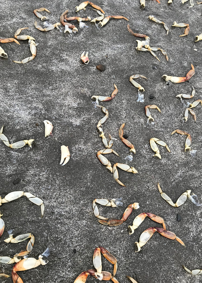 Crab claws washed up on Shi Shi Beach