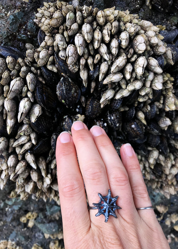 Black silver sea star ring touching barnacles and mollusks on sea stack rock face at Shi Shi Beach on northern Washington coast