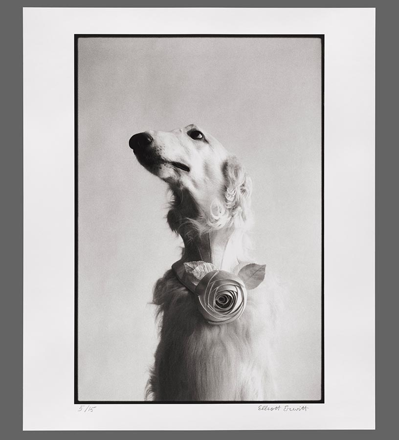 15. New York City. 1999. (Dog portrait)