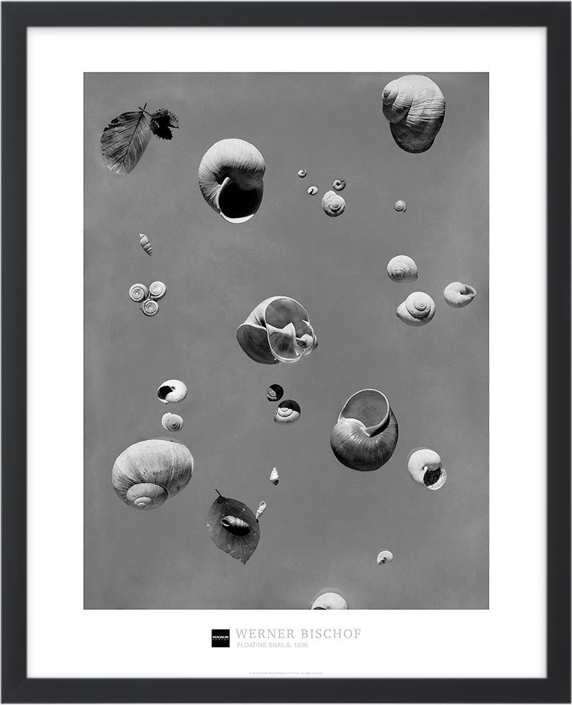 Magnum Collection Poster: Floating snails. 1936.