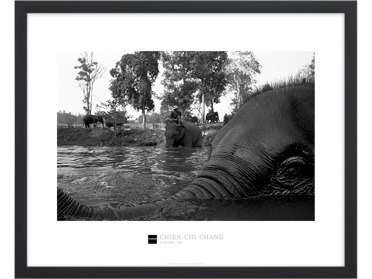 Magnum Collection Poster: Elephant, Thailand. 1997.