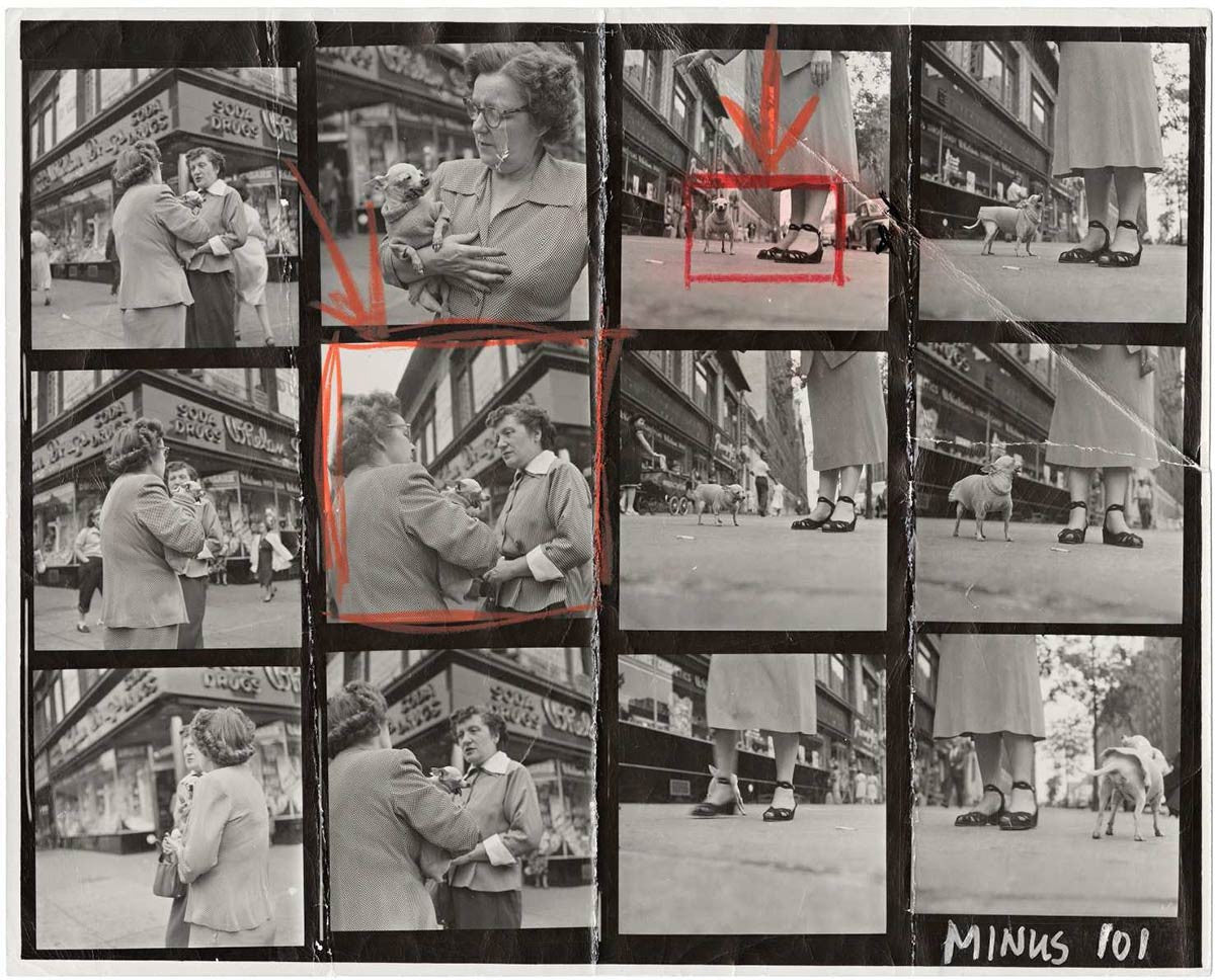Contact Sheet Print: Chihuahua New York
