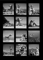 Contact Sheet Print: Dog in Italy
