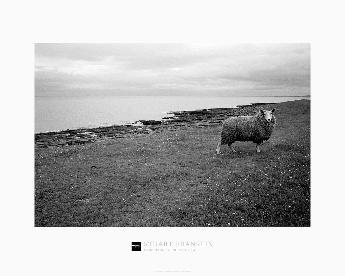 Magnum Collection Poster: Farne Islands. England. 2004