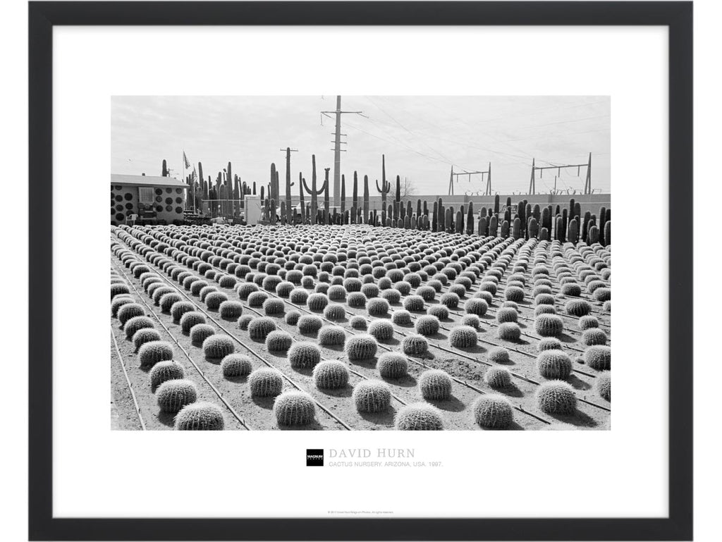 Magnum Collection Poster: Cactus Nursery. Arizona, USA. 1997.