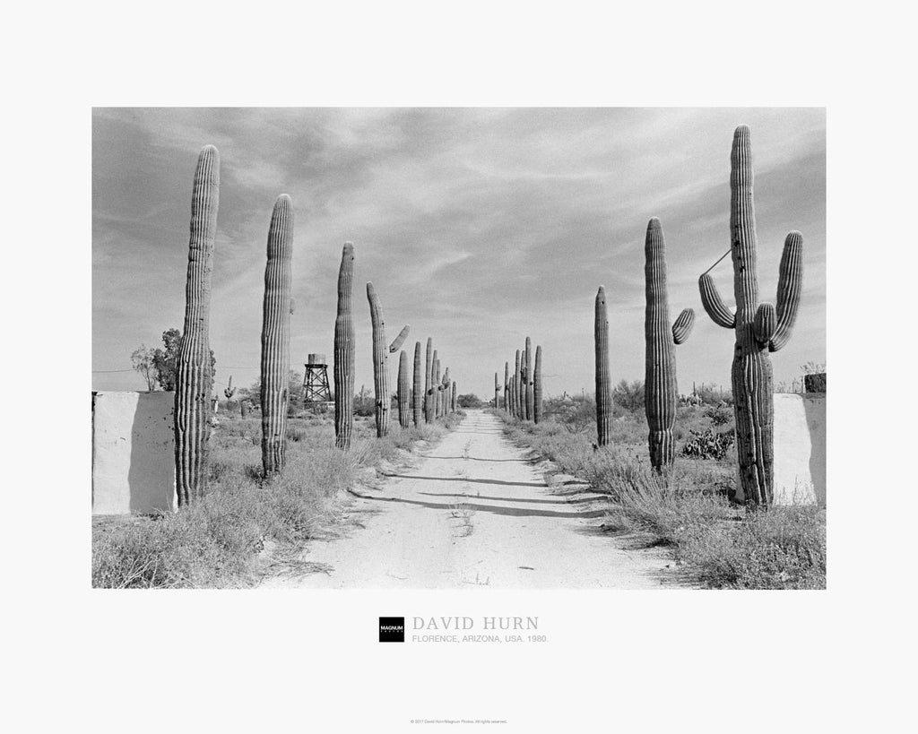 Magnum Collection Poster: Cactus Forest Road. Florence, Arizona. 1980.