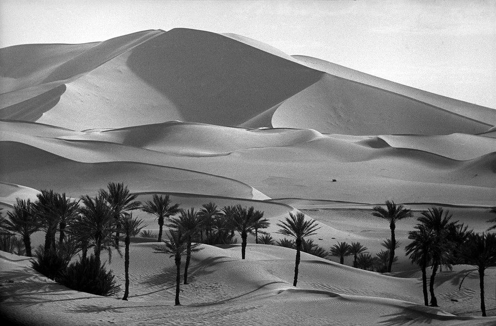 Kerzaz palms near the Grand Erg Oriental. Sahara Desert, Algeria. 1957.