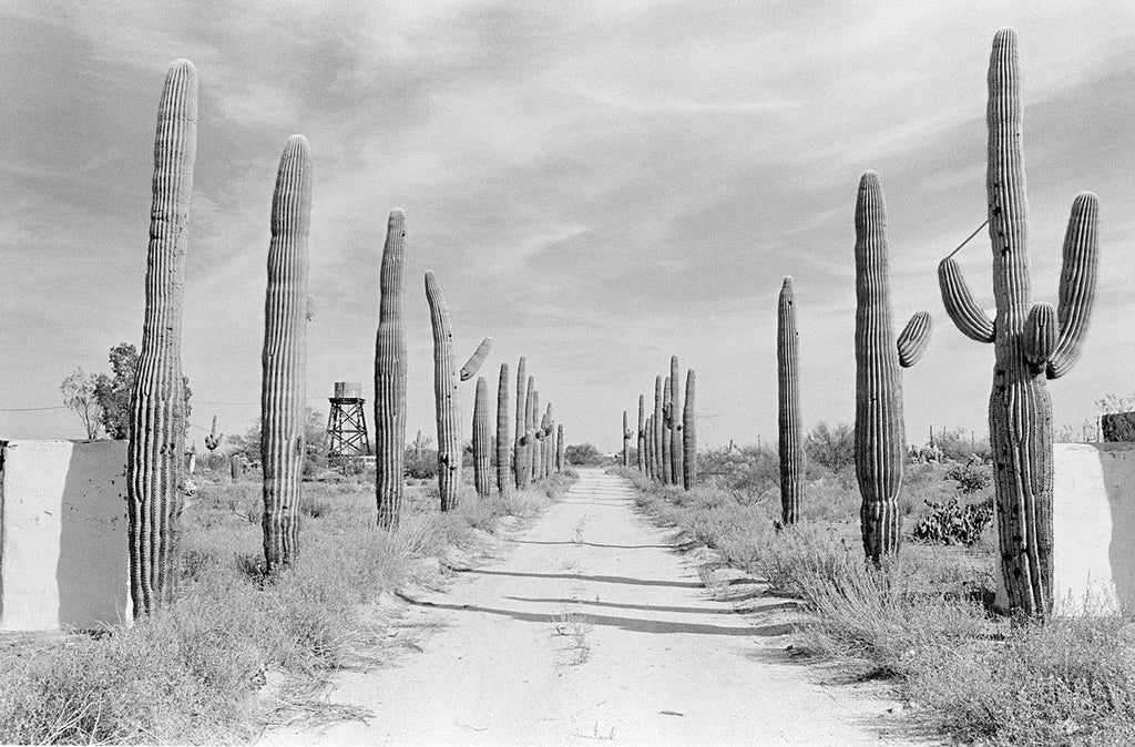 Cactus Forest Road. Florence, Arizona, USA. 1980.