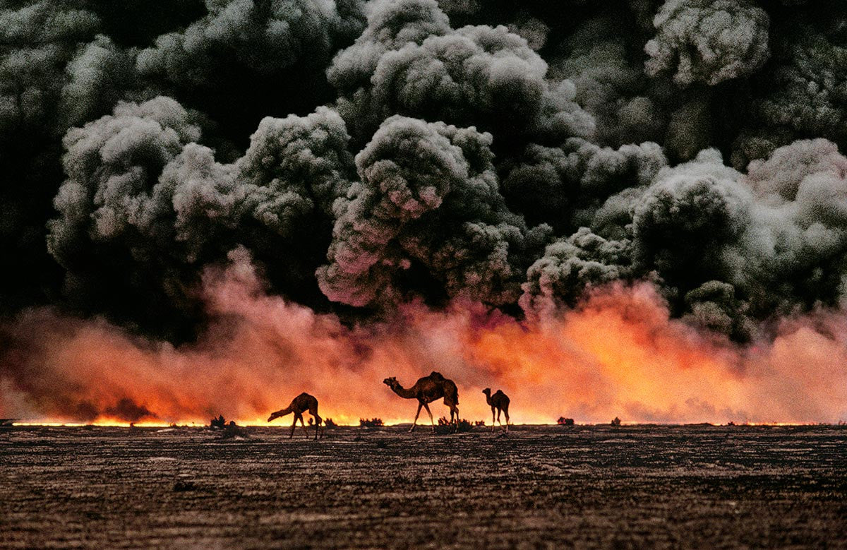 Camels and oil fire. Kuwait, 1991.