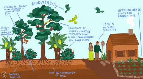 Bio diversity diagram that explains how planting trees with farm lands helps to preserve the soil as well as diminish carbon gases.