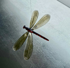 HANGING DRAGONFLY