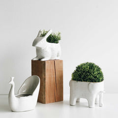 Jack Rabbit Planter
