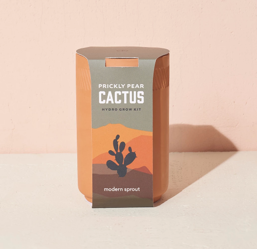 Terracotta Kit Cactus Blend