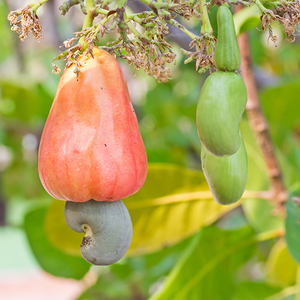 Cashews • Raw • Indonesia