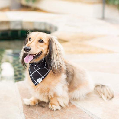 Windowpane Check Black Dog Bandana (Reversible)