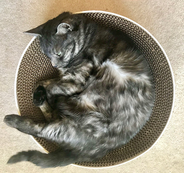 cats curl up