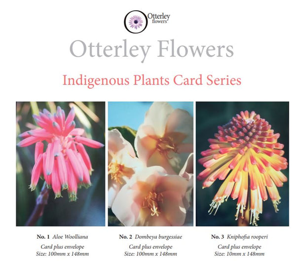 Indigenous Plants Card Series