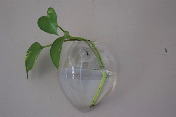 Oval Glass Wall Terrarium