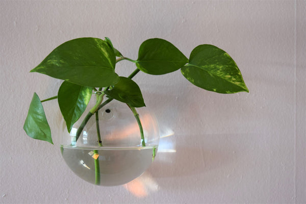 Large Circular Glass Wall Terrarium