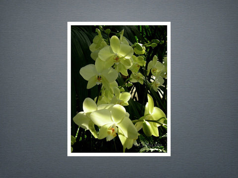 Orchids - Set of 6 cards