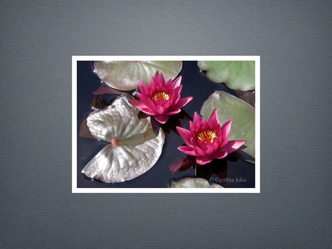 Water Lilies - Set of 6 cards