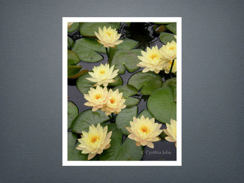 Water Lilies 2 - Set of 6 cards