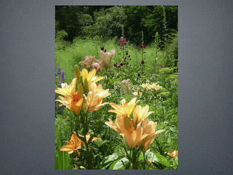 Lilies and Hollyhock