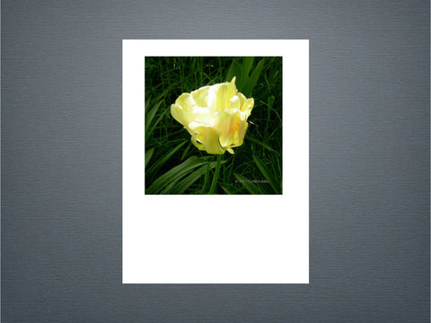 Tulip - Set of 6 cards (New)