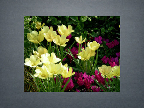 Tulips and Cyclamen