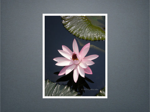 Water Lily 23 - Set of 6 cards (New)