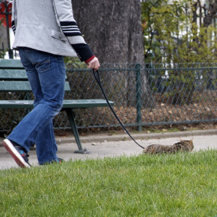 Cat on a leash, Paris, Nichole Robertson