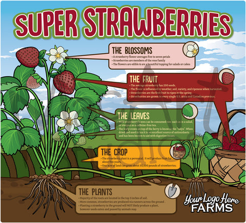 *NEW: Super Strawberries